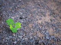 De Eenzame Ongewenste Flora stock afbeelding