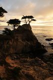 De Eenzame Pijnboom, Grote Sur royalty-vrije stock fotografie
