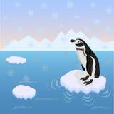 De eenzame pinguïn Stock Foto