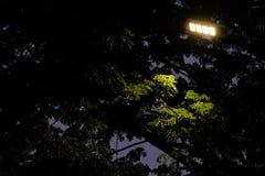 De eenzame straatlantaarn glanst aan sommige bladeren in de duisternis stock fotografie