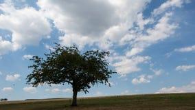 De eenzame tijdspanne van de boomtijd stock videobeelden