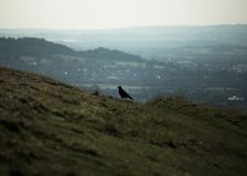 De eenzame vogel op de heuvel royalty-vrije stock foto