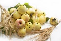 De eerste appelen van de Herfst Stock Foto's