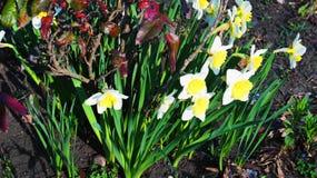 De eerste bloemen in het park Stock Afbeelding