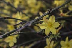 De eerste bloemen komen aan het leven in de lente royalty-vrije stock fotografie