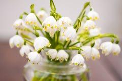 De eerste bloemen van de lente royalty-vrije stock afbeeldingen