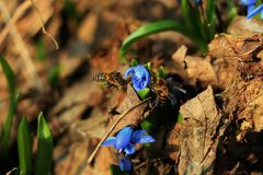 De eerste bloemen van de lente stock foto's