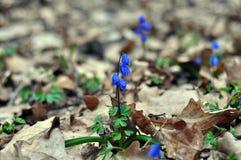 De eerste bloemen zijn sneeuwklokjes royalty-vrije stock afbeeldingen