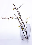 De eerste de lentebladeren Royalty-vrije Stock Fotografie
