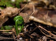 De eerste groei van de lente in het bos Stock Afbeeldingen