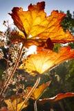 De eerste herfstbladeren op een september-dag royalty-vrije stock foto