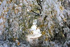 De eerste herfstsneeuw Bieszczady Royalty-vrije Stock Foto's