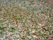De eerste laten vallen-uit sneeuw heeft een groen gras en gele gevallen bladeren behandeld Stock Foto