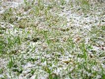 De eerste laten vallen-uit sneeuw heeft een groen gras en gele gevallen bladeren behandeld Royalty-vrije Stock Afbeeldingen