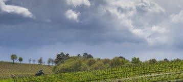 De eerste de lentebladeren op a trellised wijnbouw in wijngaard, Bordeaux, Frankrijk royalty-vrije stock afbeelding