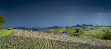 De eerste de lentebladeren op a trellised wijnbouw in wijngaard, Bordeaux, Frankrijk stock foto