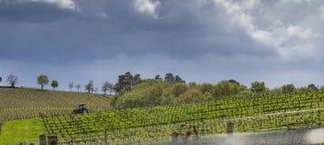 De eerste de lentebladeren op a trellised wijnbouw in wijngaard, Bordeaux, Frankrijk royalty-vrije stock fotografie
