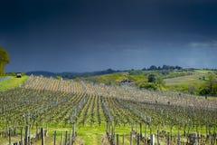 De eerste de lentebladeren op a trellised wijnbouw in wijngaard, Bordeaux, Frankrijk stock foto's