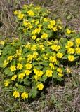 De eerste de lentebloemen stock foto's