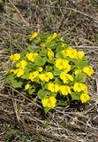 De eerste de lentebloemen royalty-vrije stock foto's