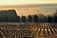 De eerste militaire begraafplaats van de wereldoorlog stock afbeelding