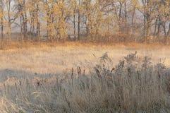 De eerste ochtendvorst in de herfst Stock Afbeelding