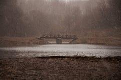 De eerste regen in de lente Royalty-vrije Stock Foto