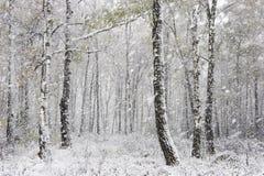 De eerste sneeuw royalty-vrije stock fotografie