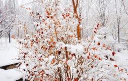De eerste sneeuw Stock Foto's