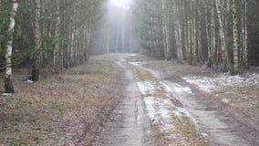 De eerste sneeuw behandelde de grond in berk stock videobeelden