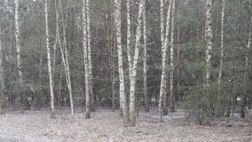 De eerste sneeuw behandelde de grond in berk stock footage