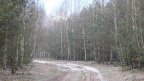 De eerste sneeuw behandelde de grond in berk stock video