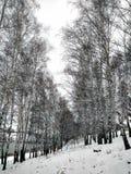 De eerste sneeuw en het water in Venev Royalty-vrije Stock Foto