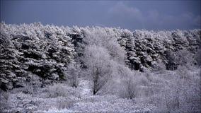 De eerste sneeuw in Falkensee op 12 November, 2015, Brandenburg Duitsland stock footage