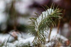 De eerste sneeuw in Oktober Royalty-vrije Stock Afbeeldingen