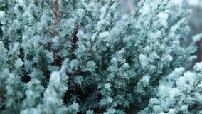 De eerste sneeuw valt op een boom stock videobeelden