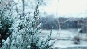 De eerste sneeuw valt op een boom stock footage