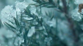 De eerste sneeuw valt op een boom stock video
