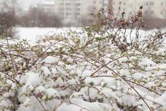 De eerste sneeuwstorm stock fotografie