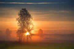 De eerste stralen van de zononderbrekingen door de takken van een boom Stock Afbeelding
