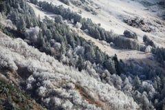 De eerste vorst in de bergen Stock Fotografie