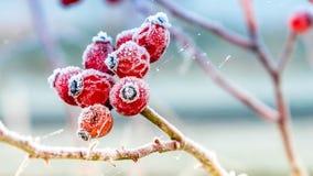 De eerste winterlicht op grondmist Stock Afbeeldingen
