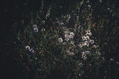 De eerste zonnige ochtendstralen van de zon worden weerspiegeld in een bosopen plek Wilde weidebloemen en kruiden Close-up Donker royalty-vrije stock foto's