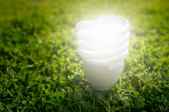 De efficiënte gloeilamp van de energie Stock Foto