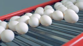 De eieren die zich op een transportband bewegen, sluiten omhoog stock videobeelden