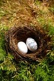 De eieren van de duif Stock Foto