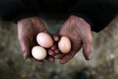 De eieren van de holding Stock Foto