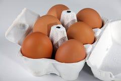 De eieren van de kip Stock Afbeeldingen