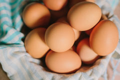 De eieren van de kip Royalty-vrije Stock Afbeelding