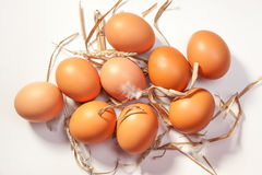 De eieren van de kip Royalty-vrije Stock Foto